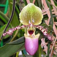 The Orchid Show : Cuba en fleur