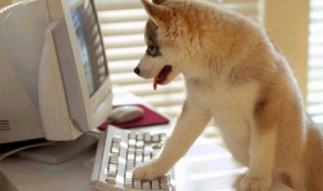 Les chiens new-yorkais ne pourront plus se faire tatouer mais ils pourront toujours surfer sur Internet ;-)