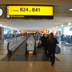 L'aéroport New York JFK veut mieux accueillir les animaux