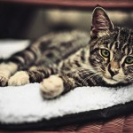 Les chats en vedette à New York