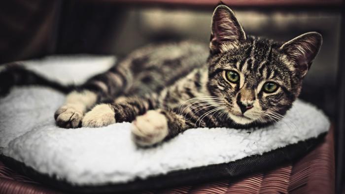 Les chats ont-il pris le contrôle d'Internet ? (Photo  Ansel Edwards)