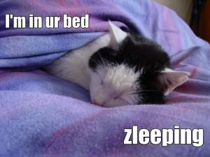 Un lolcat endormi. (Photo M. J.)