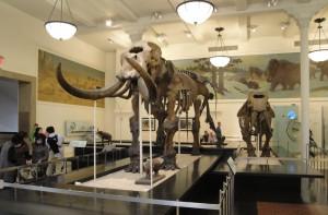 Des dinosaures plus vrais que nature ! (Photo Sharon Mollerus)
