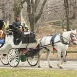 La mairie de New York réduit le nombre de calèches dans Central Park