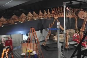 Un dinosaure géant entre au Musée d'Histoire naturelle de New York