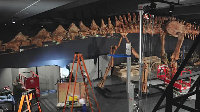 La reconstitution du titanosaure en cours de montage. (Photo AMNH)