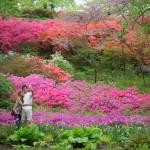 Le jardin botanique de New York fête ses 125 ans