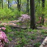 Visitez la forêt cachée de Central Park