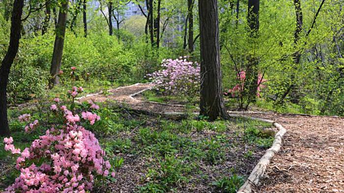 Suivez le nouveau parcours du Hallett Nature Sanctuary. (Photo CPC)