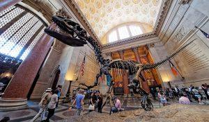 Dinosaure au musée d'Histoire naturelle de New York