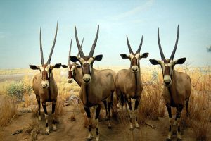 oryx new york