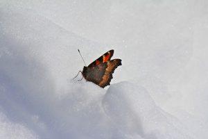 Les papillons vous attendent à New York !
