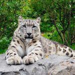 Zoo de Central Park : la jungle à New York !