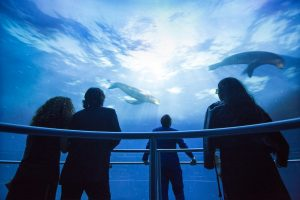 Jetez-vous à l'eau à New York avec l'Ocean Odissey