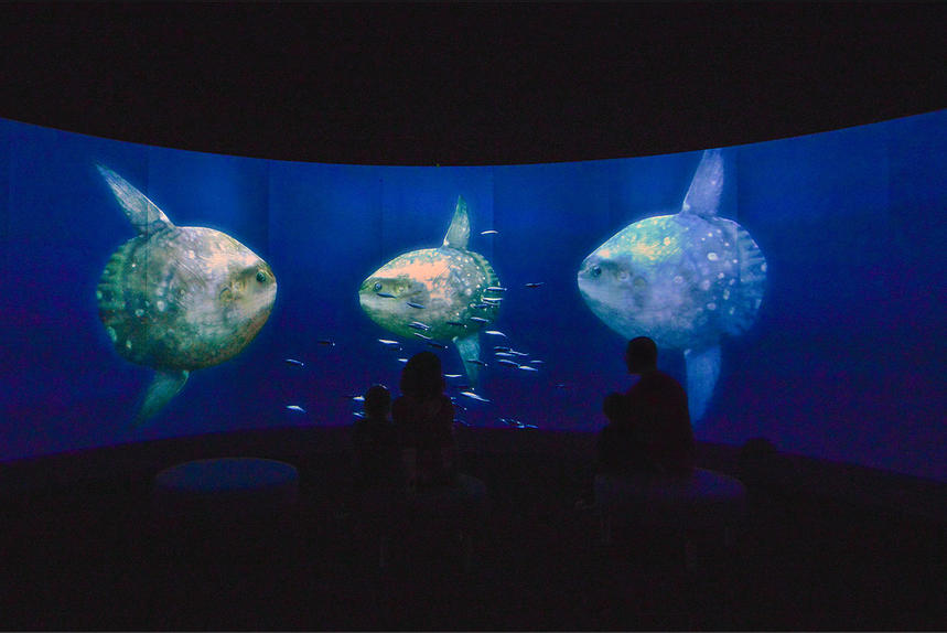 exposition musee histoire naturelle new york
