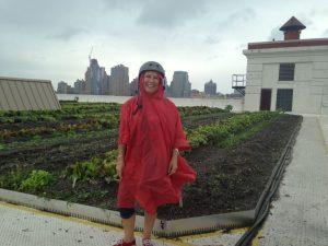 Sur le toit de la Brooklyn Grange