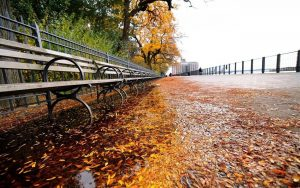automne New York