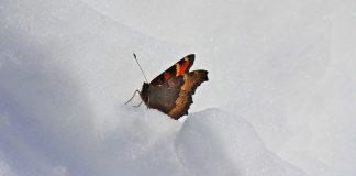 papillons new york