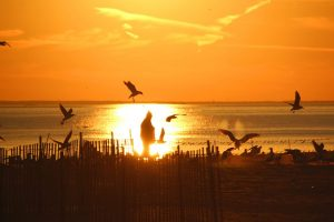 plage coney island new york