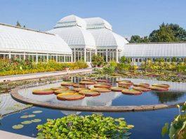 jardin botanique new york