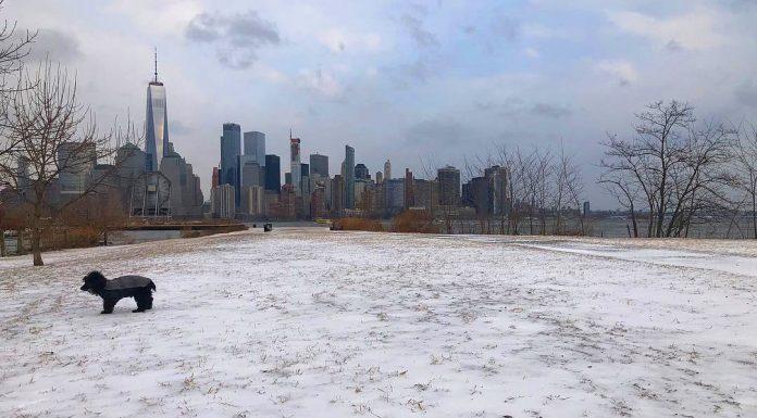 new york city neige