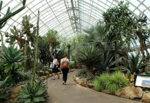 New York Botanical Garden, The Bronx