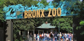 bronx zoo new york